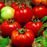 tomats-SULTAN-F1